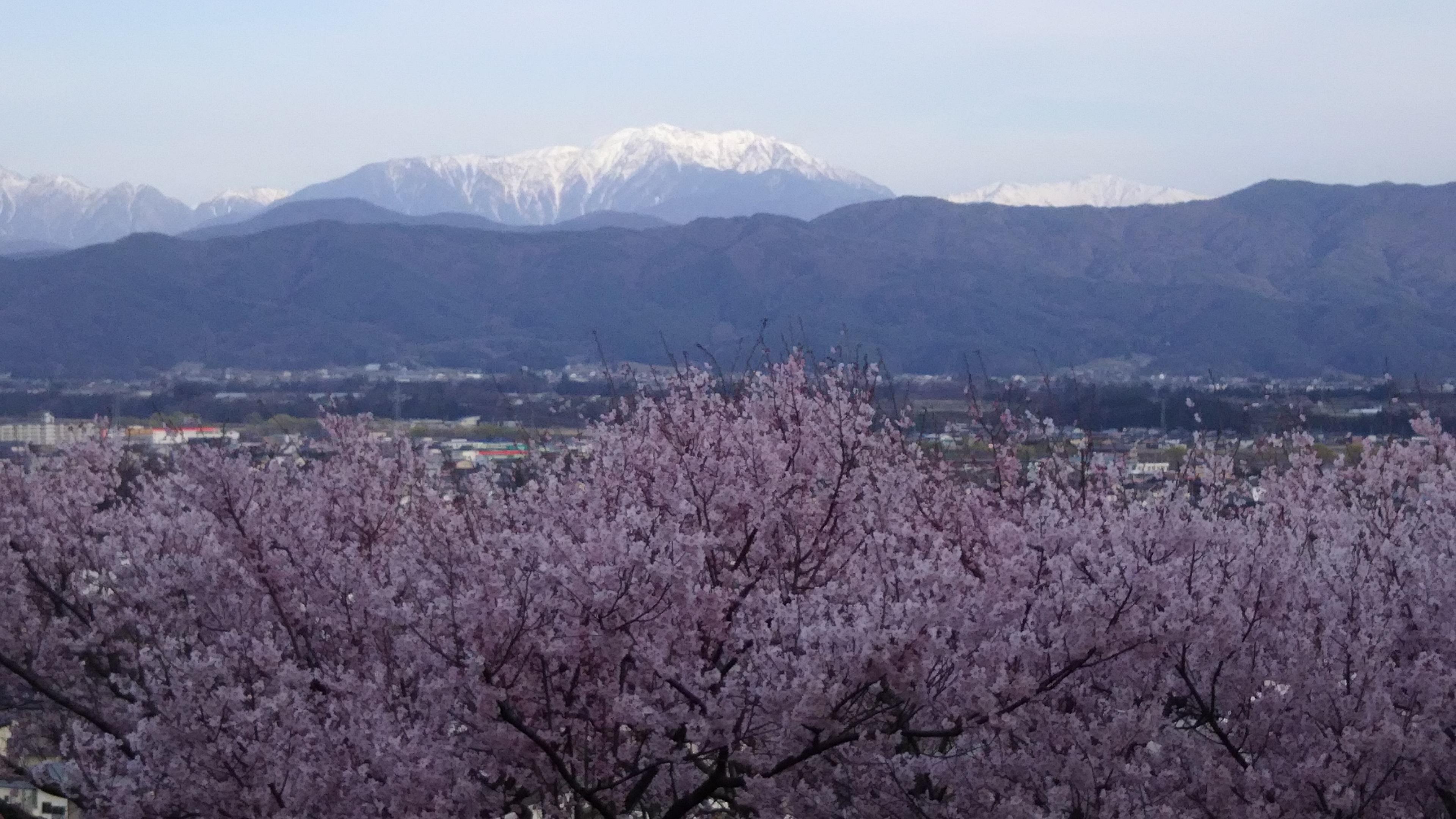 28,4,6春日公園桜