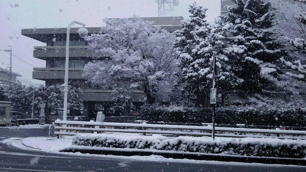 28,11,24雪と県庁議会棟